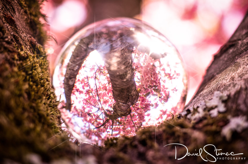 Glaskugel Fotos